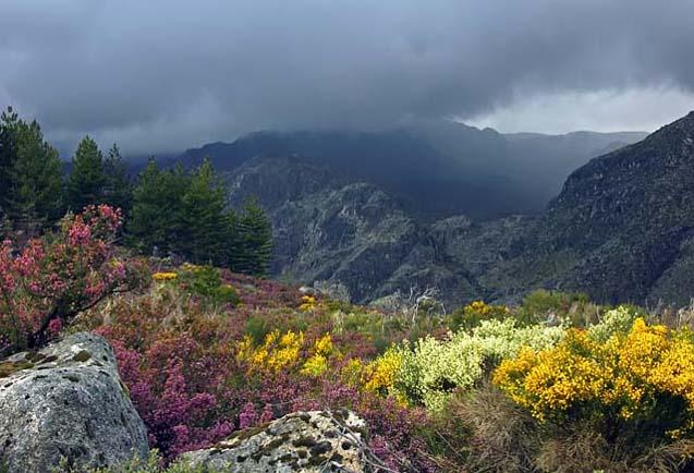 Parque Natural da Serra da Strela
